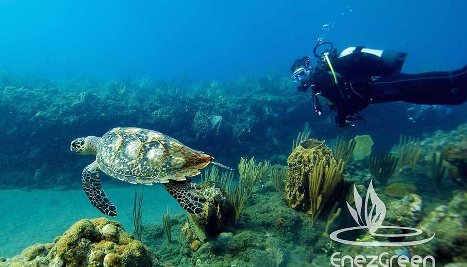 plongeur sous-marin nageant derrière une tortue équipé d'une lampe plongée SUB M3 Mk2